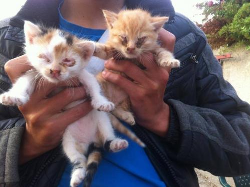 2 chatons.jpg
