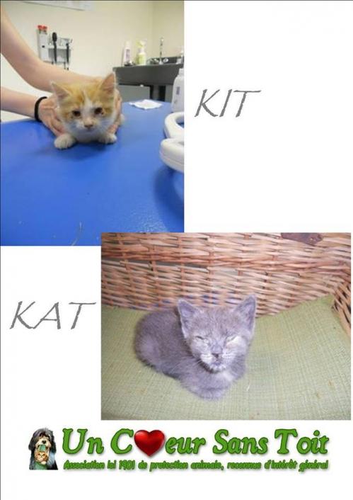 kit et kat.jpg