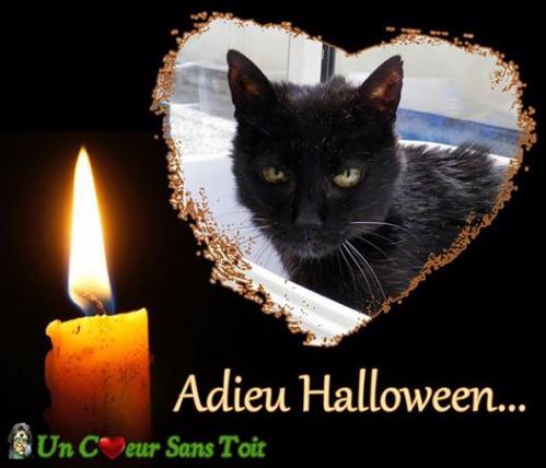 adieu halloween.jpg