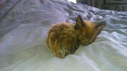 chaton chetif.jpg