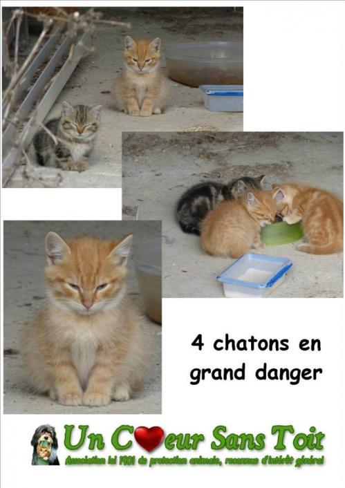 4 chatons en danger.jpg