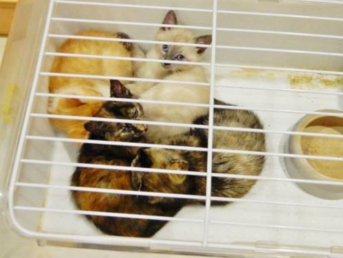 4 chatons1.jpg