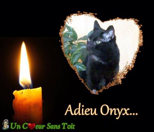 adieu onyx.jpg