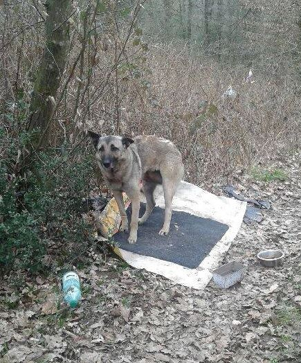 chien abandonné.jpg