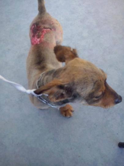 chien blessé1.jpg