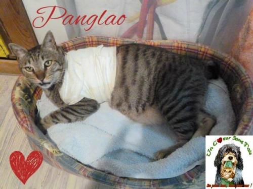 PANGLAO.jpg