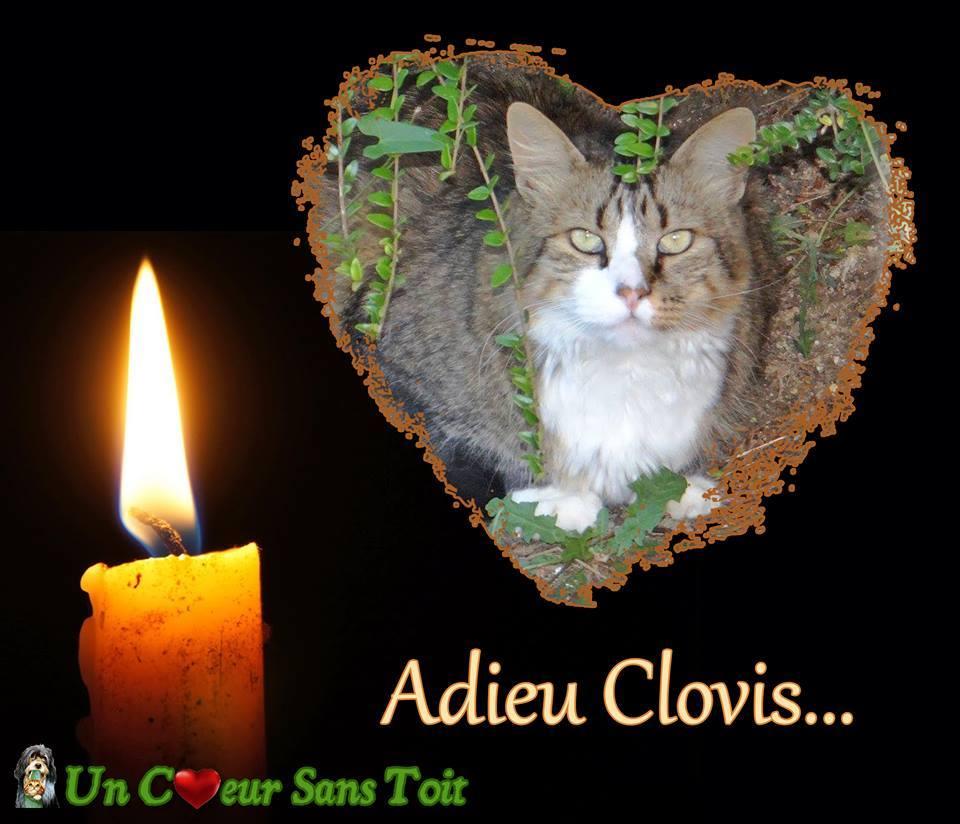 adieu clovis.jpg