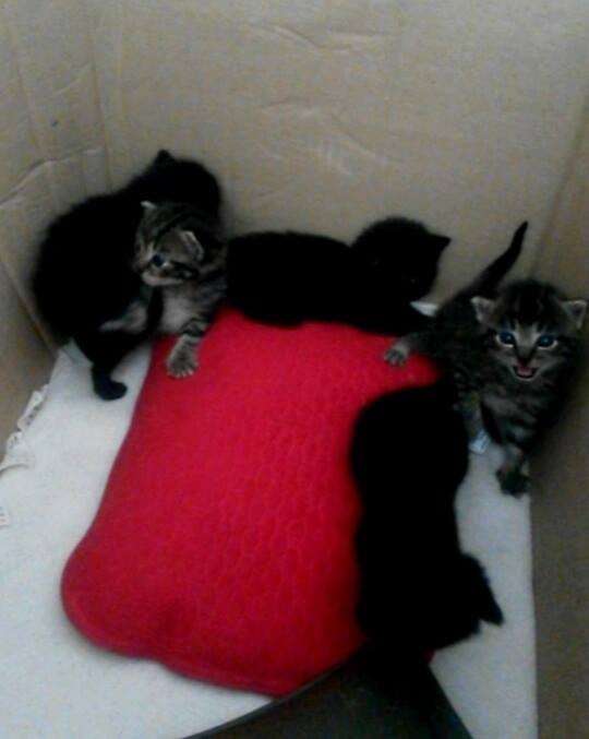 5 chatons.jpg
