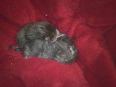 3 jeunes chaton.jpg