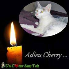 cherry.jpg