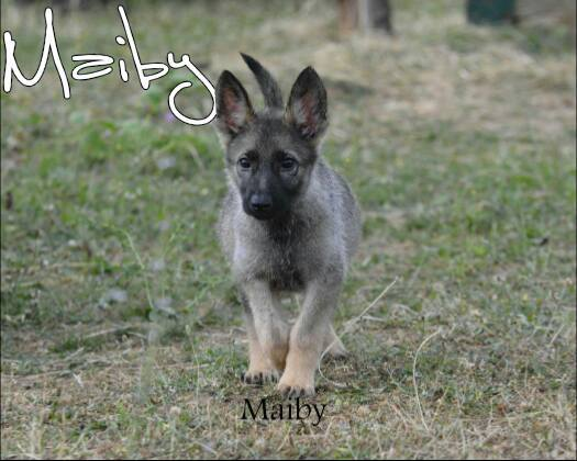 urgence chiot maiby.jpg
