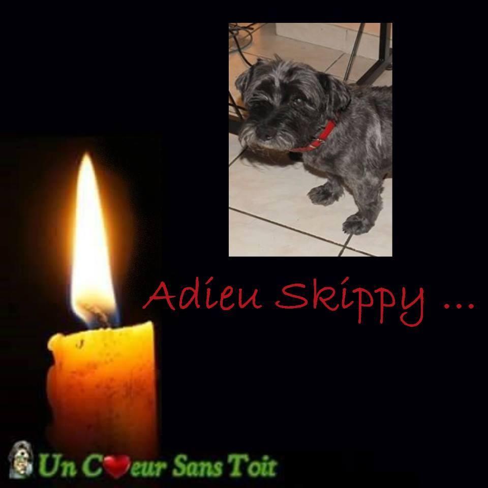 skippy et croc1.jpg