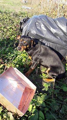 petit chien trouvé1.jpg