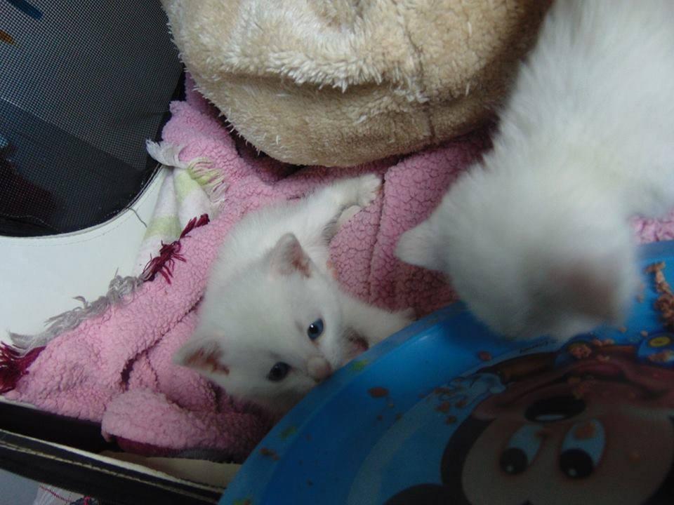 2 chatons2.jpg