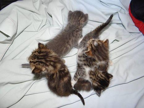 4 chatons.jpg