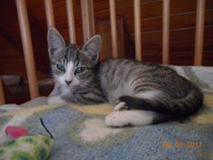 chaton adopté2.jpg