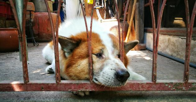 chien en danger2.jpg