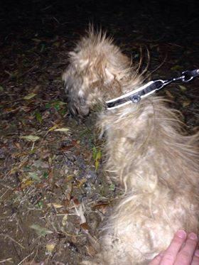 urgence chien trouvé1.jpg