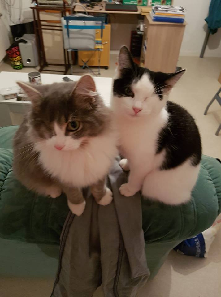 chaton bauné.jpg