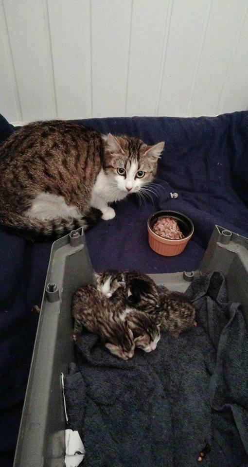 urgence chatte et chaton.jpg