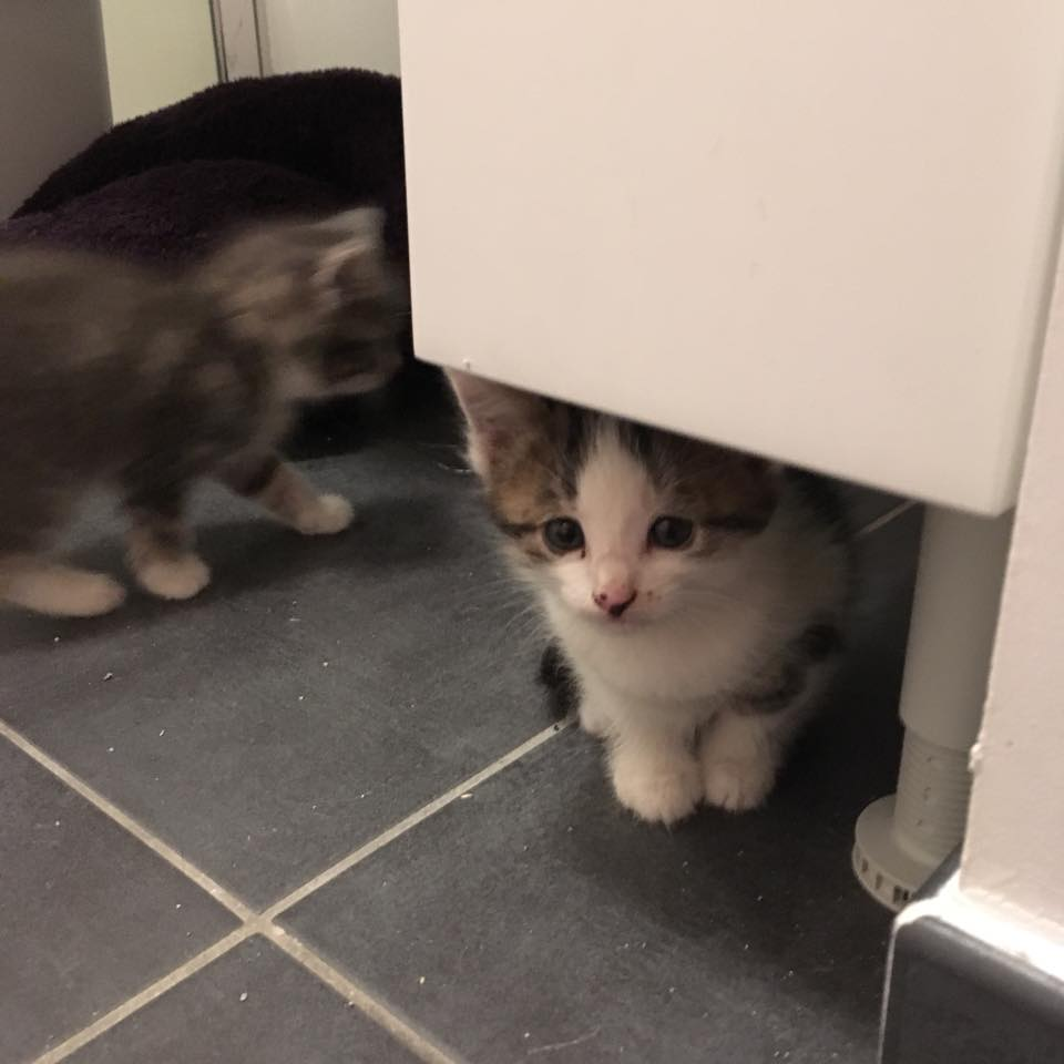 3 chatons2.jpg
