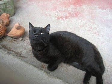 chat blessé.jpg