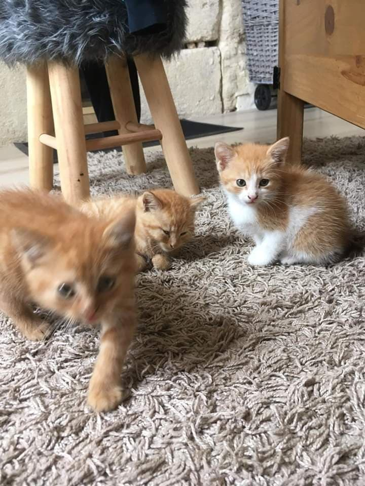 4 chatons et la maman 1.jpg