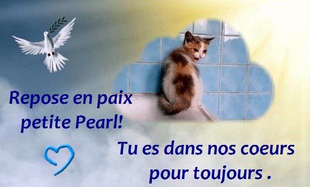 adieu pearl.jpg