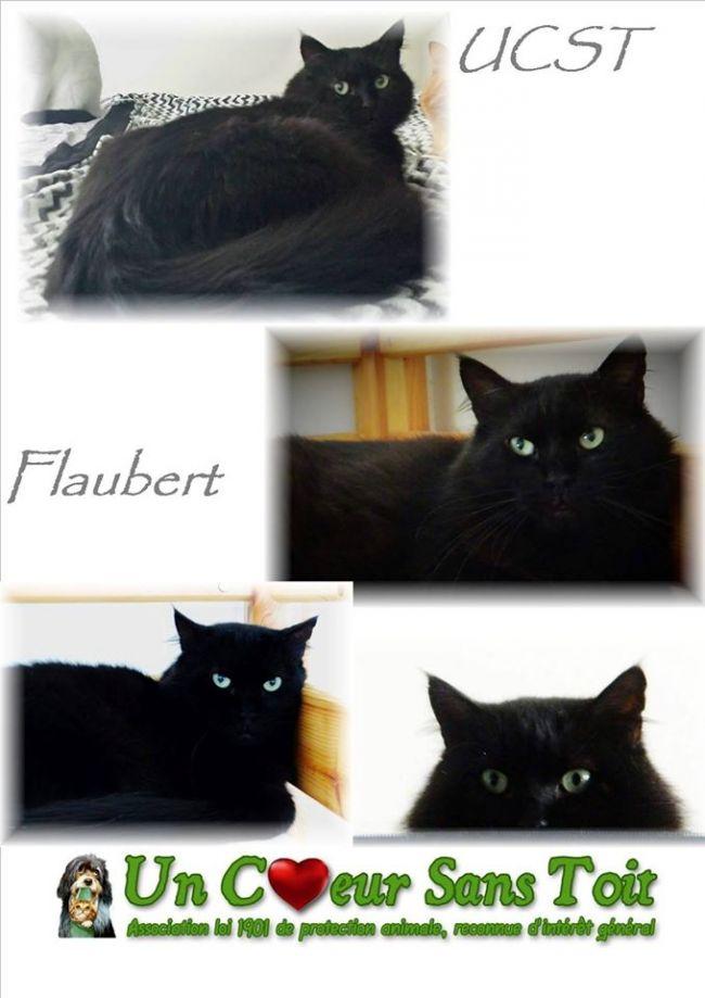 Flaubert, né le 01/07/2010
