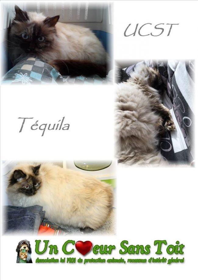 Téquila, née le 01/01/2000