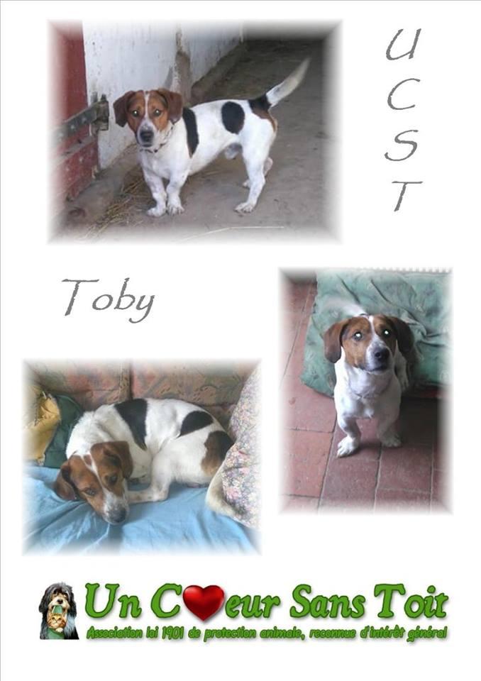 Toby, né le 23/02/2016