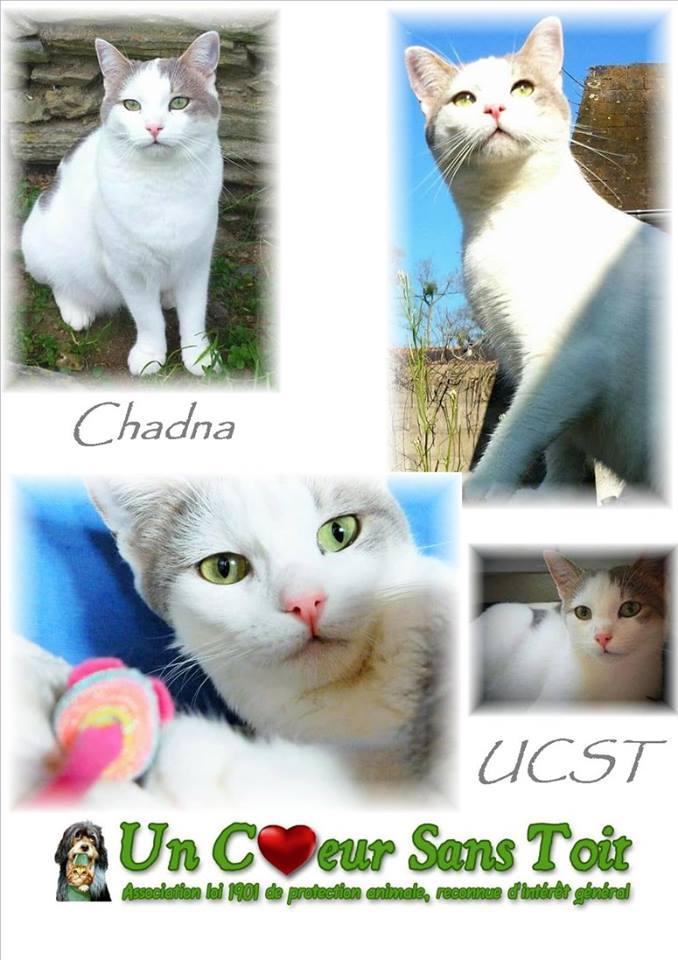 Chadna, née le 01/01/2015