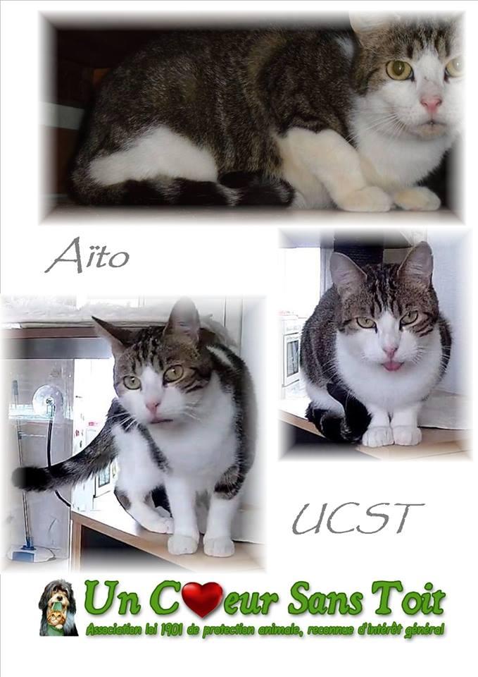 Aïto, né le 01/06/2013