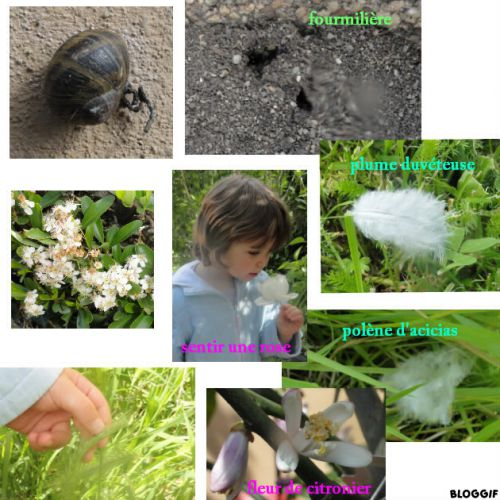 observer la nature : fleurs, futurs fruits, petits animaux . . .