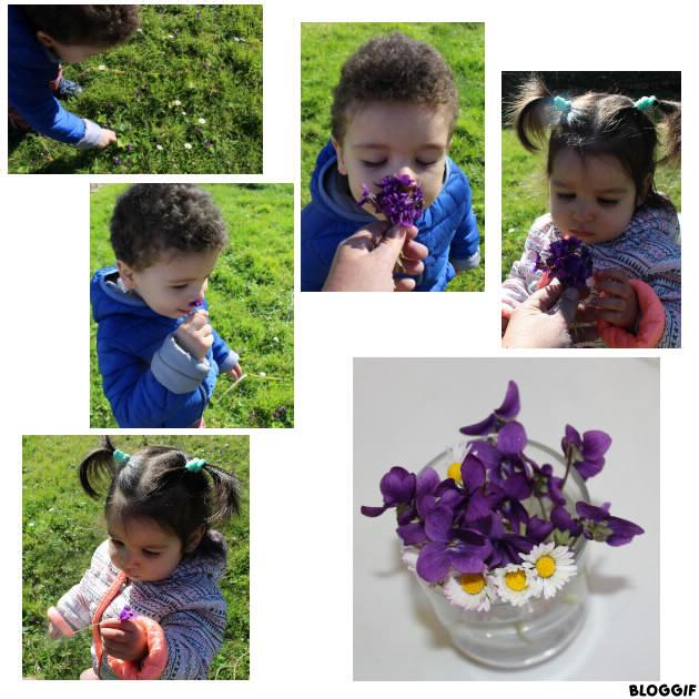 promenade, et cueillette de violettes et marguerites ! pour la fête de la violette !