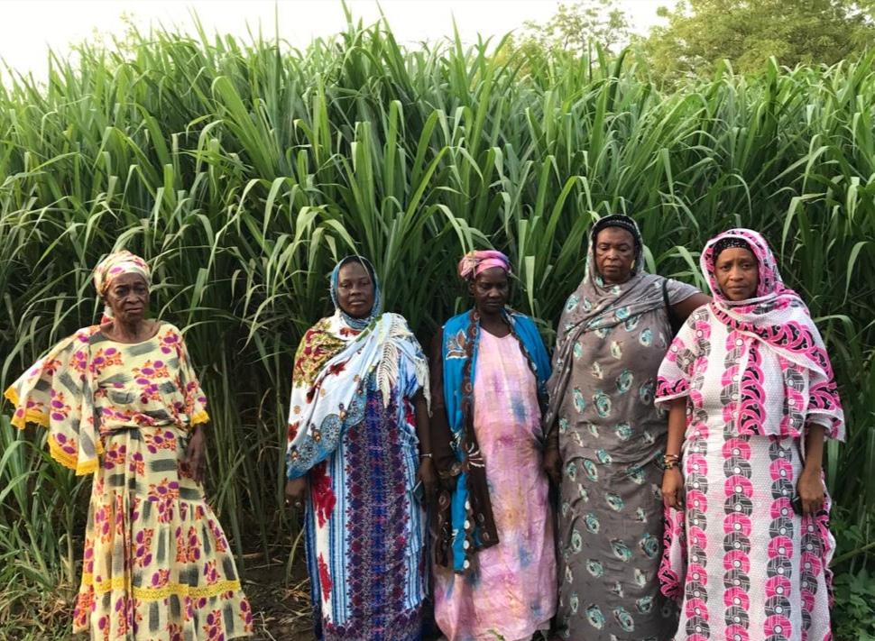Senegal et resilience climatique.jpg