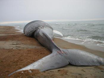 baleine-blesser-274838.jpg