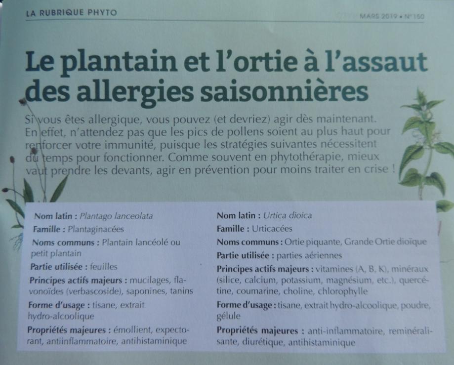 article CAroline gayet ortie plantain.jpg
