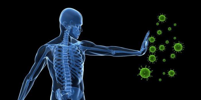 systeme immunitaire.jpg