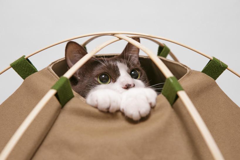 chat dans toile de tente.jpg
