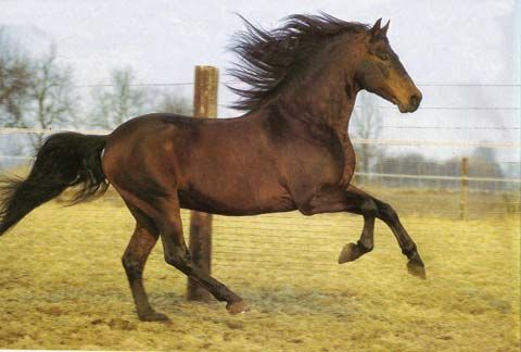 Alter-Real au galop