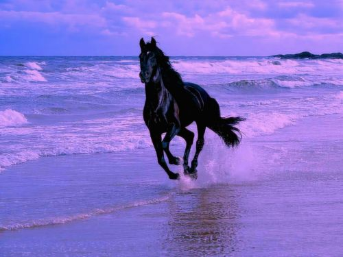 Cheval au galop sur la plage