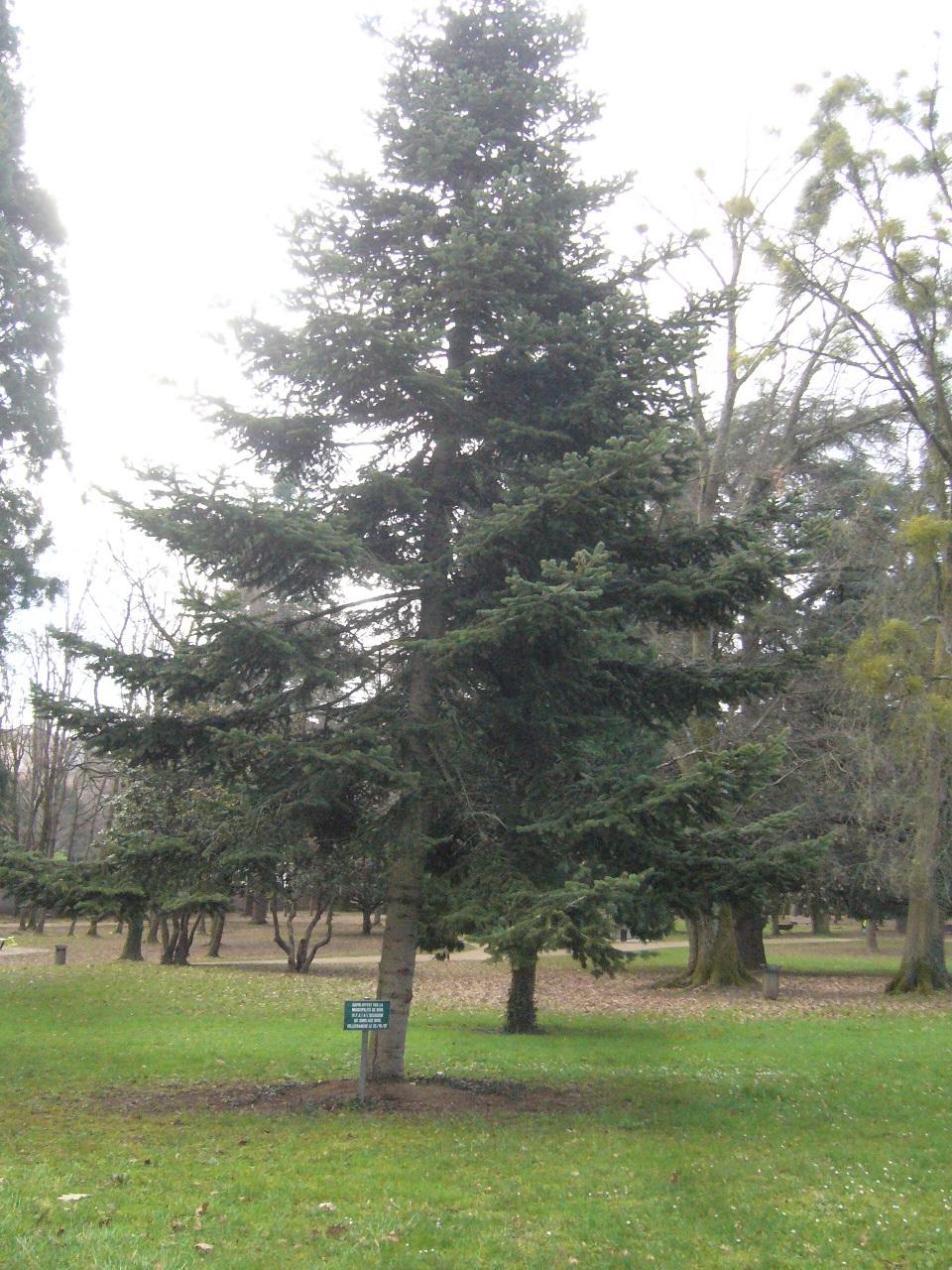 arbre planté en 1987.jpg