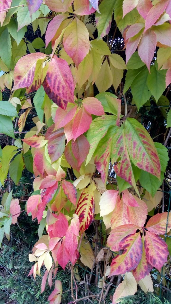 feuillez d'automne.jpg