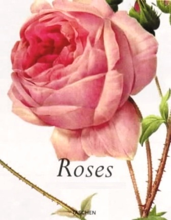 Redoute - Roses.jpg