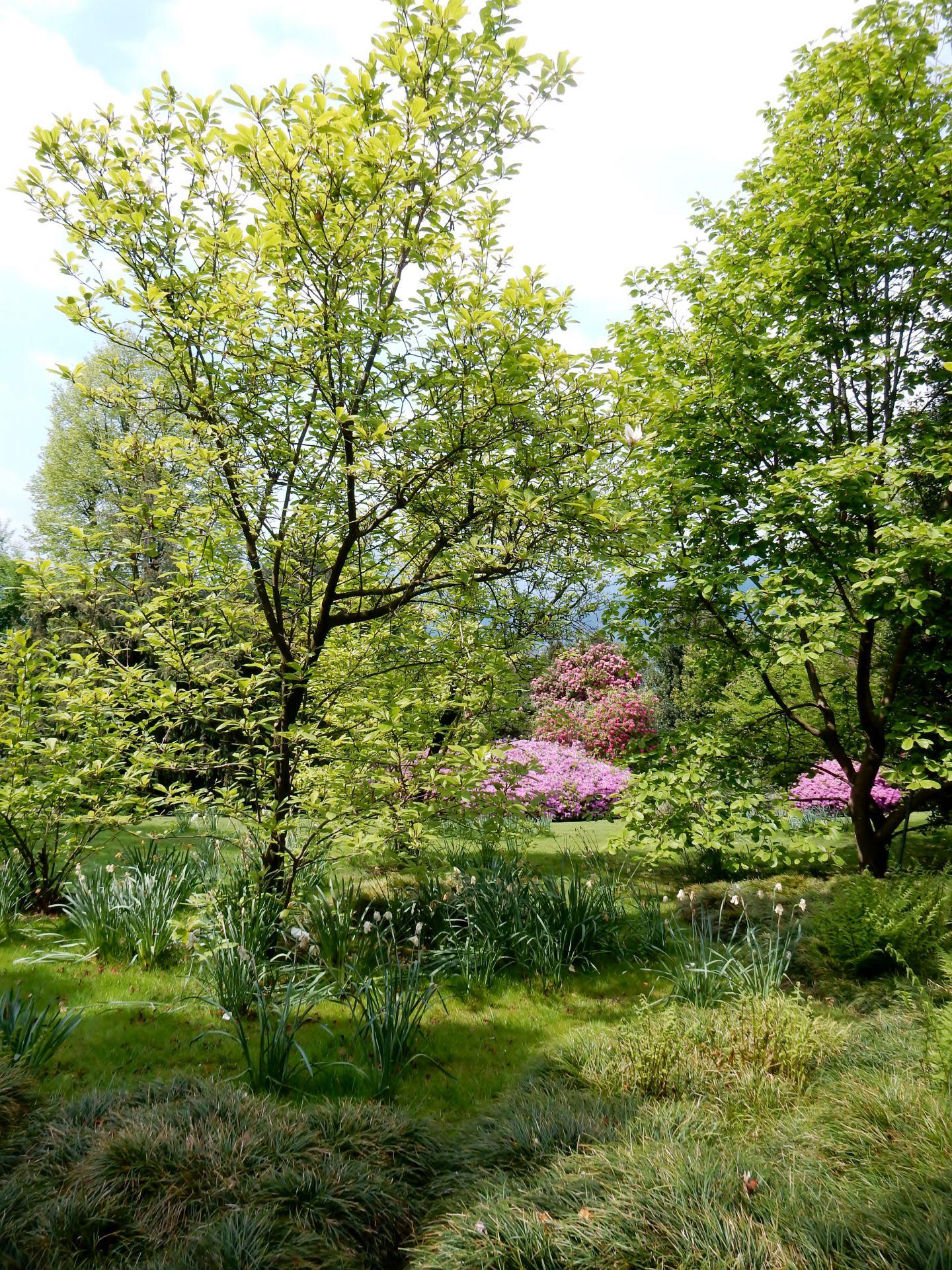 Italie dans le jardin d 39 isola madre le voyage par l 39 image - Le jardin d italie chateauroux ...