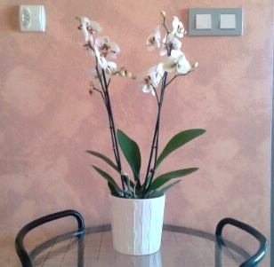 Orchidee-PascalePetit_02sept2014.jpg