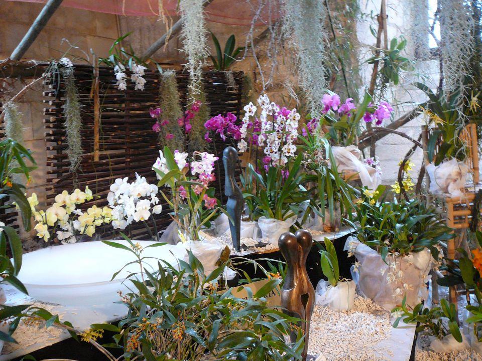 Les Orchidées en folie