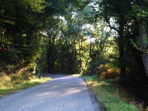 Petit matin d'automne dans les sous-bois de Mont d'Astarac