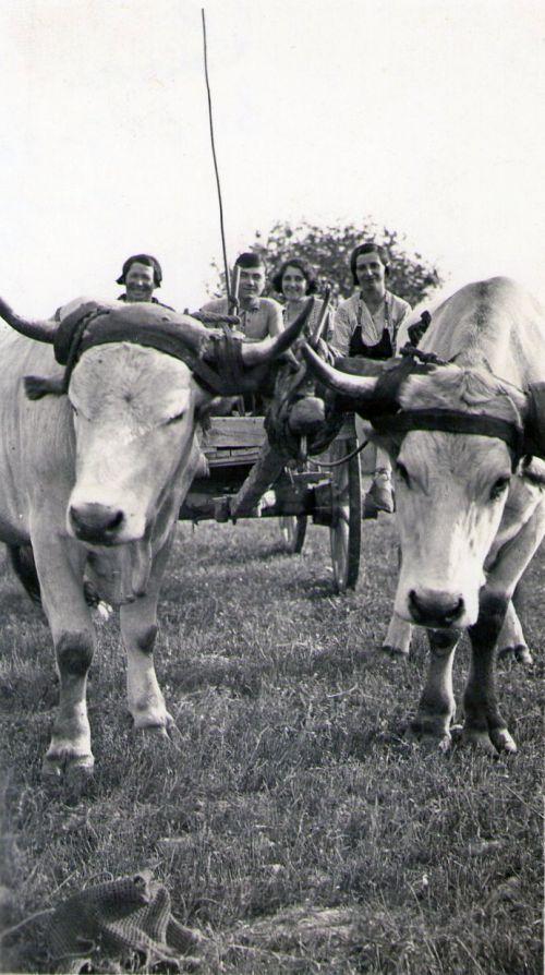 Transport à la campagne en 1935